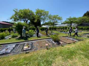 令和2年度 「薬用植物園・ハーブ園」での学外実習の実施