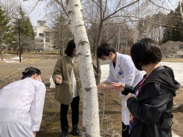 青森大学×SDGs「北東北の特色ある天然素材を用いたESD教材の開発」